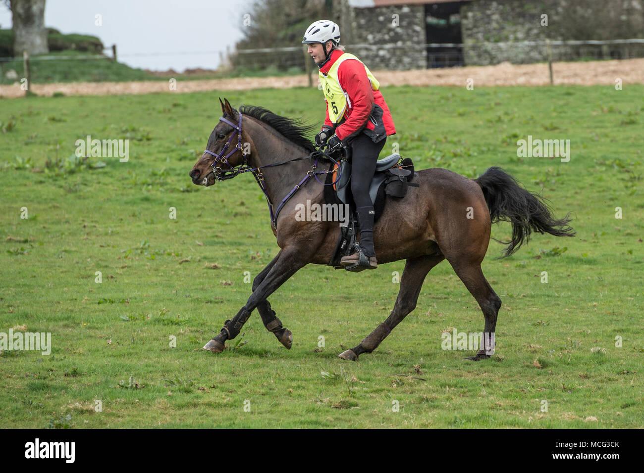 man galloping a horse on an endurance race UK - Stock Image