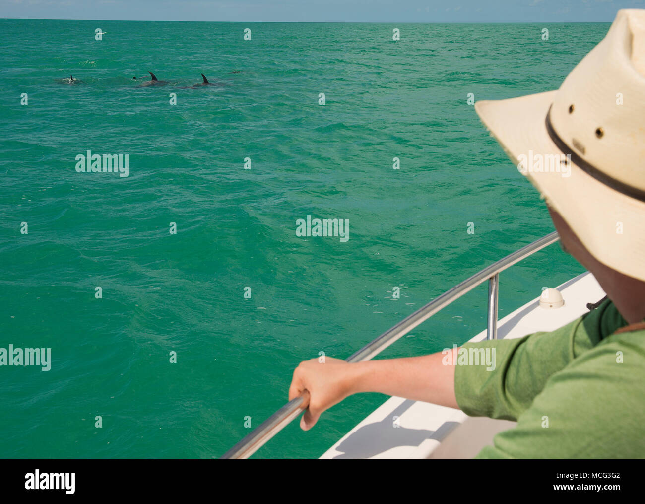 A person dolphin watching in Key West, Florida. - Stock Image