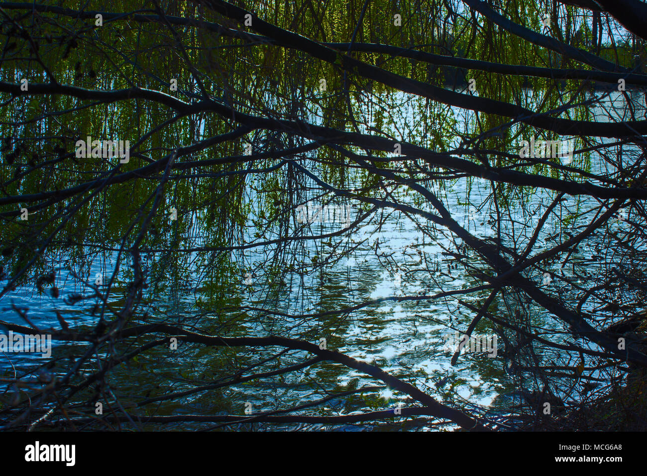 A view of the lake over a broken tree. On the background is blue sky. Reflection of the sun on the water surface Stock Photo