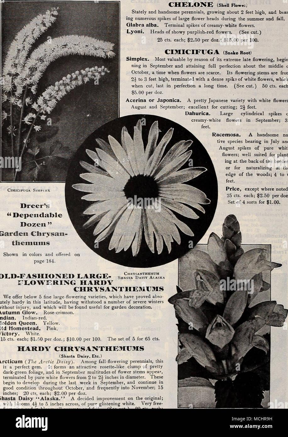 Dreers Dependable Dozen Garden Chrvsan Themums Shown In Colors