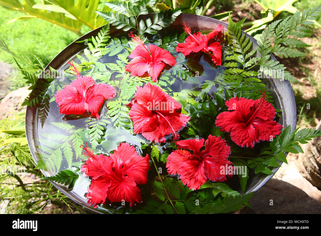 Red Hibiscus Flowers Floating In Water Surrounded By Tropical Green