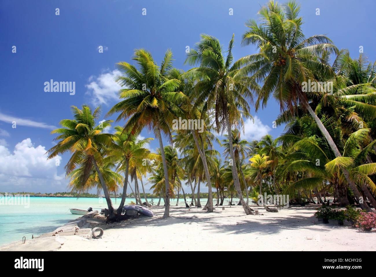 Tropical beach with palm trees, Bora Bora, French Polynesia. - Stock Image