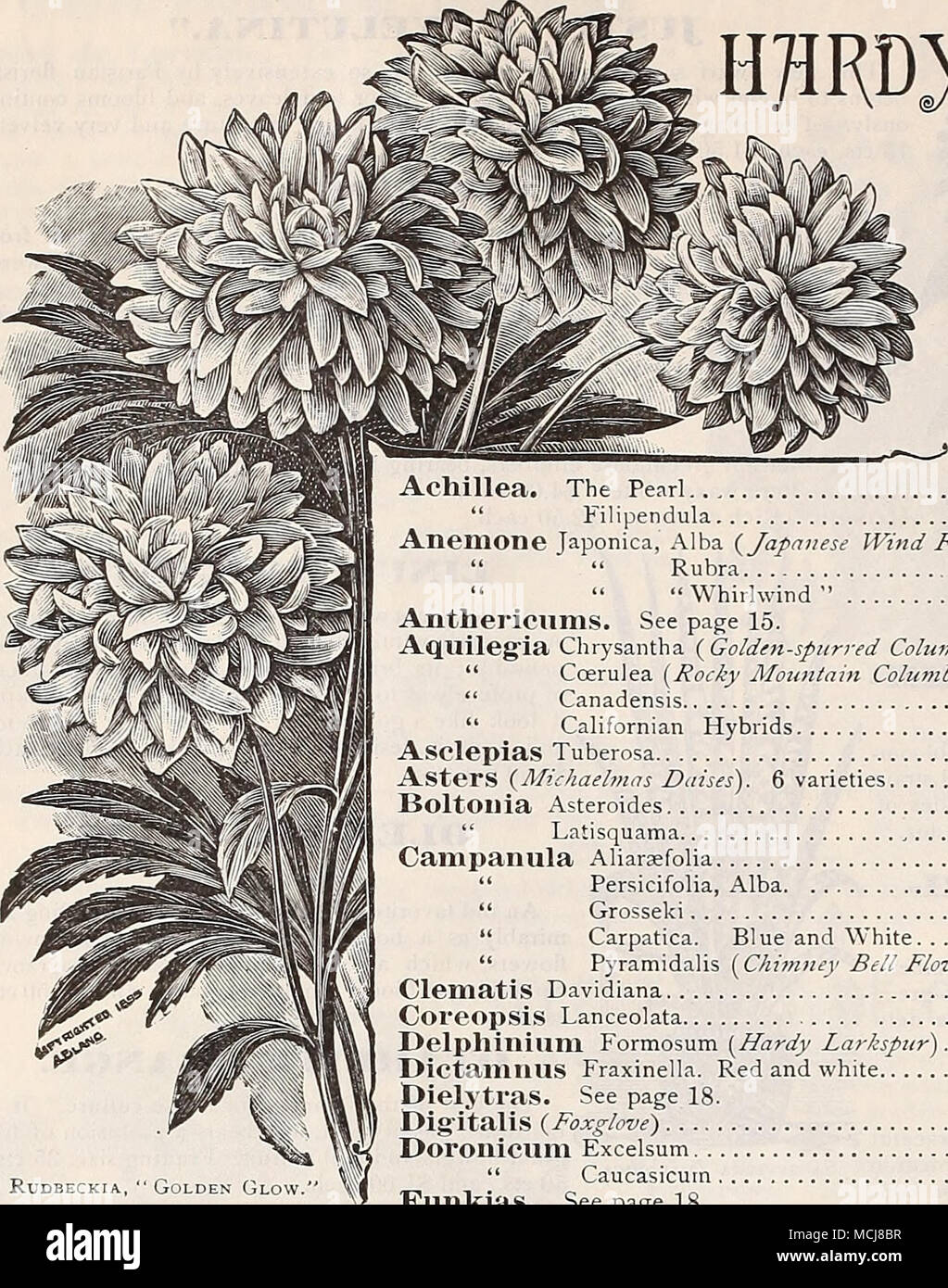""". Preer's Autumn Catalogue, 1898. HflRDy PEKENNIH&S For Autumn Planting. w^c The following is a select list of Hardy Perennials, all of which can be planted during the Fall months with perfect success. For complete list and descriptions see our Garden Calender for 1898. RuDBECKIA The Pearl """" Filipendula Anemone Japonica, Alba {Japanese Wind Flower). Rubra """" """" """" Whirlwind """" Anthericums. See page 15. Aquileg'ia Chrysantha {Golden-spurred Columbine) . """" Ccerulea (Rocky Mountain Columbine') . """" Canadensis """" Californian Hybrids Aselepias Tuberosa Asters { - Stock Image"""