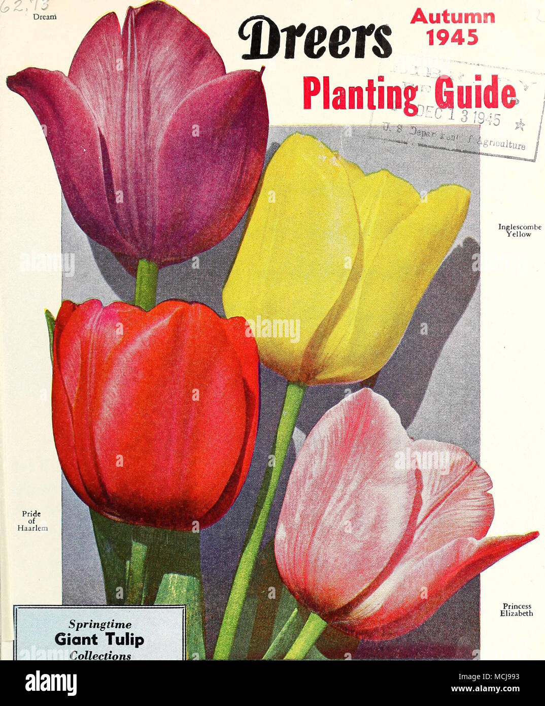 Springtime Giant Tulip Collections These contain the four mag ...