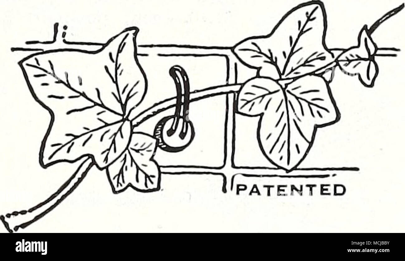 PATENTED Wayward Vine Guide and Support. A new and easy way to train ...