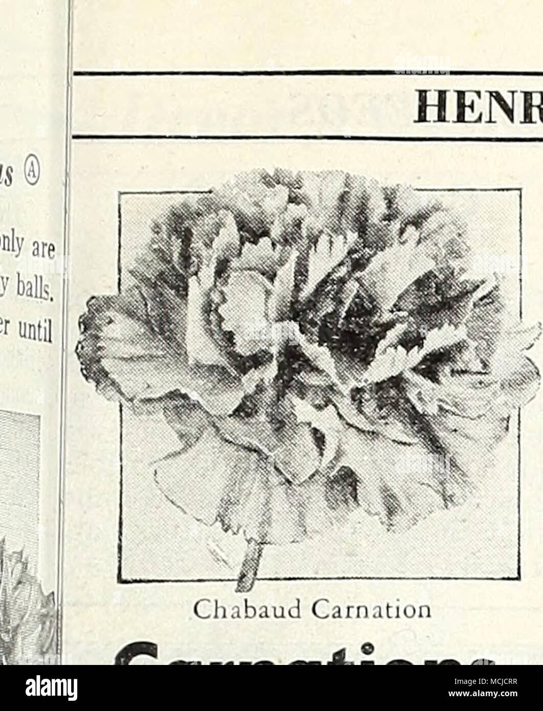 . HENRY A. DKEER, Inc., Philadelphia, Pa. r Carnations anthus caryophyllus @ & [hhp] [ndispensable for greenhouse culture winter and for the summer garden. habaud's Giant Double [nup] Richly clove-scented, large double ooms measuring 2 inches or more ross. Often grown as annuals bloom- 5 in 5 to 6 months from sowing. 2 ft. '61 Blood Red 1767 Scarlef 64 Deep Salmon 1768 Whi^e 65 Rose 1769 Yellow Any of the above: Pkt. 15c; large pkt. 60c. 4780 Chnbaud Carnation Collection One packet each of the rp six colors, value 90c, for OJ' ,1 770 Finest Mixed. All colors. Pkt. 15c; large pkt. 60c; 'A o - Stock Image