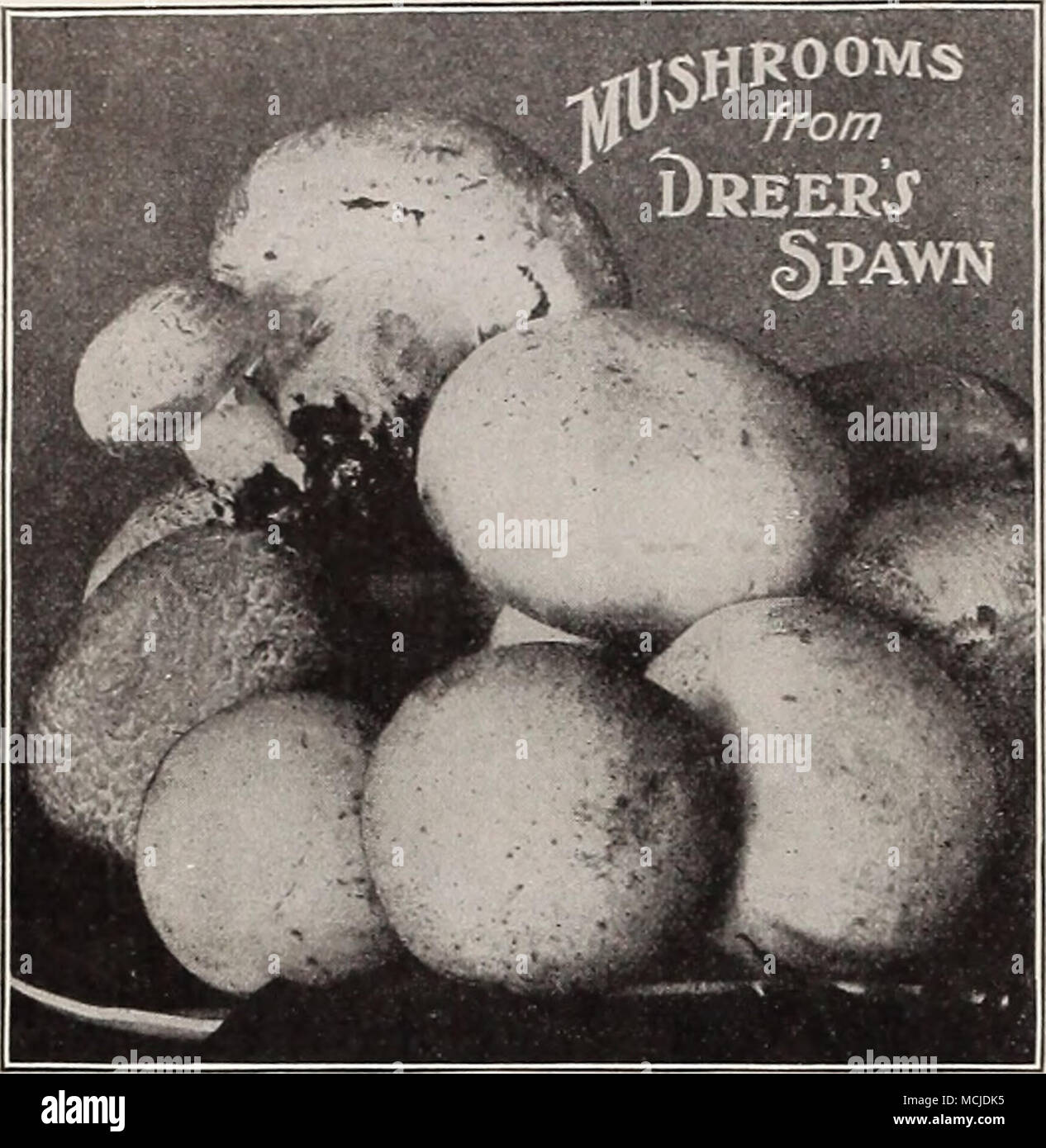 DREER'S RELIABLE MUSHROOM SPAWN  The best results are
