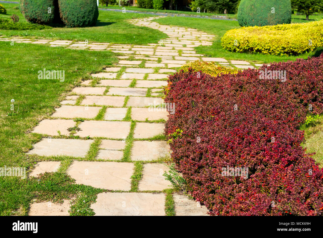 bushes of decorating in a landscape park - Stock Image