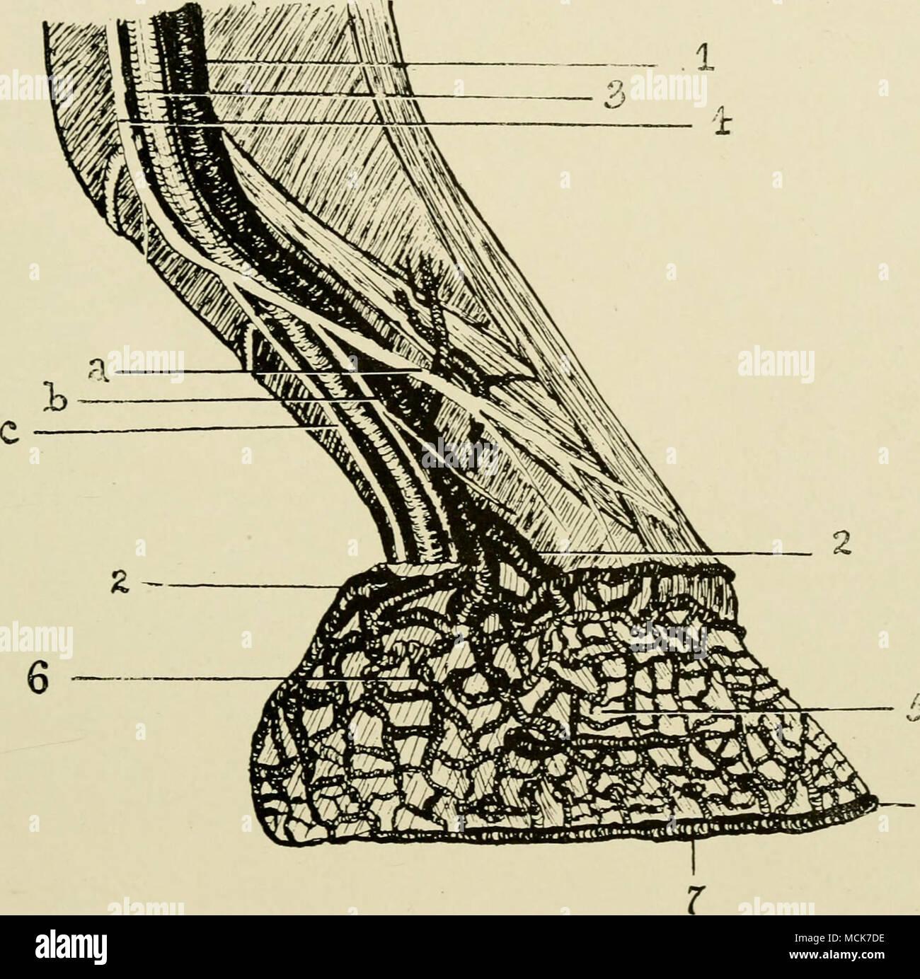 Tolle Körpermuskulatur Etikettiert Ideen - Menschliche Anatomie ...