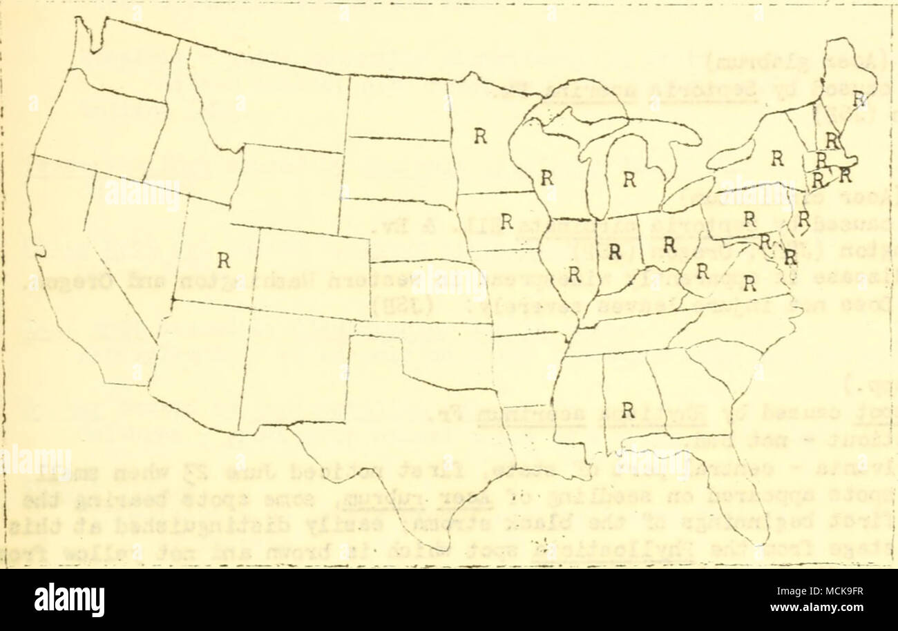 . Fig. 93- Distribution of Guif^nardia acsculi (rk,) Stewart on horse chestnut in the U. S-, according to reports received.by the Plant Disease Survey. Leaf spot caused by Phyllosticta tiliae Sacc. ard Spe^. Pennsylvania - a moderate amount of damage. (LOO) Sun scorch Connecticut LOCUST (Robinia pseudaoacia) Yellow wood rot caused by Fones rinosus Perk. Oklahoma . MADROKA (Arbutus menziesii) Leaf spot caused by Uycosphaerella arbuticola Pk. Oregon - probably v/idespread in western and southern Orecon, causes little damage. (JSP) laONOLIA (Ka-nolia sp.) ^uithracnose caused by Colletotrichu.-r.  - Stock Image