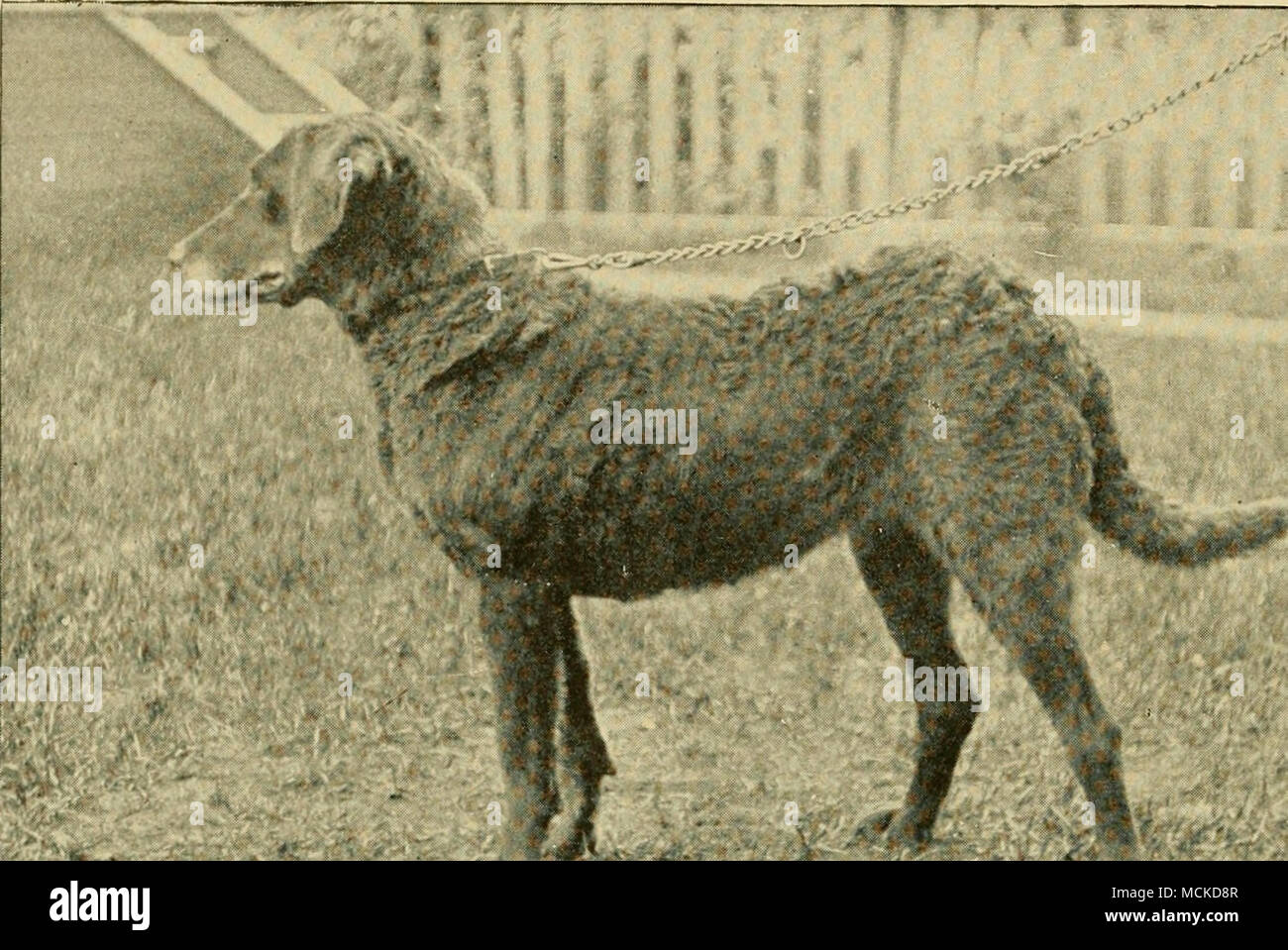 George Br Stock Photos & George Br Stock Images - Alamy