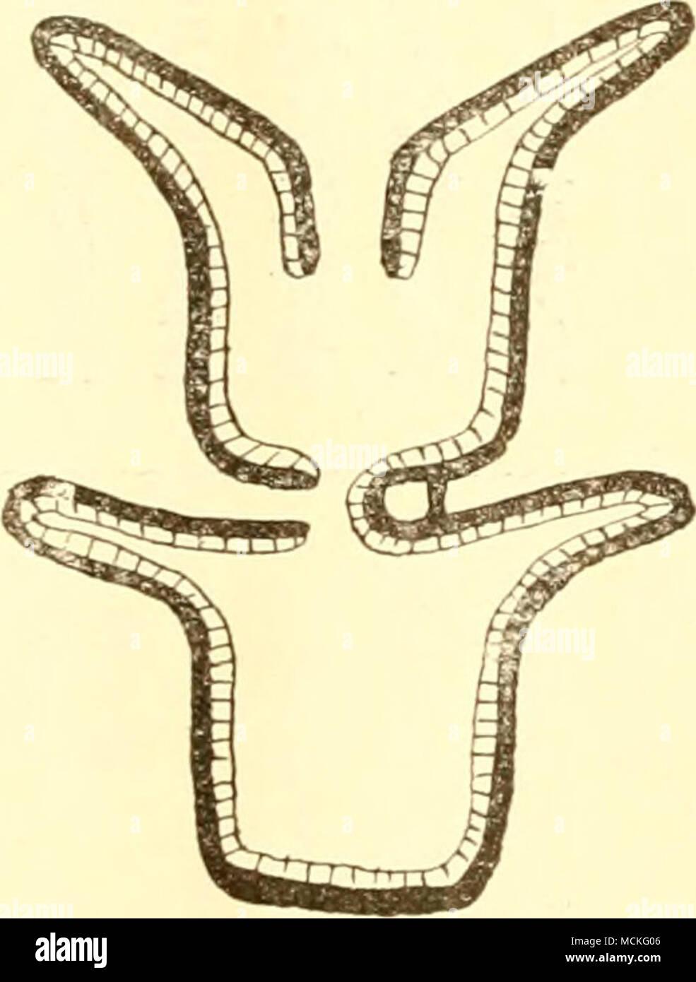 ロレックス 種類 人気   クロエ バッグ 種類