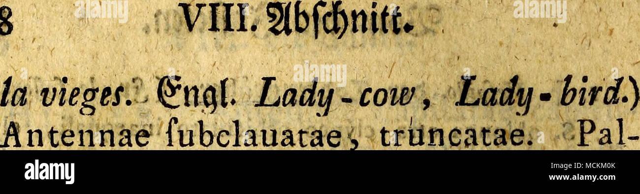 . pi claua fenricordata. Corpus hemifphae- ricum, thorace elytrisque marginatis, ab- domine piano. 1. -J-. Biptnftata. C. coleoptrls rubris, punäis nigris duobus. * 5nfd) P.IX. tab.XVI. fig. 4. 2. -J Bipuflulata. C. coleoptris iiigris pun£tts rubris duobus, abdomihe fanguineo. * ßvifd) P. IX. tab.XVI. fig. 6. Ii. Chrysomela. SölattEdfec Anten- me moniliformes, excrorfum crafllores. Thorax, nec elytra, marginatus. I, -J*. Gottingevfi£_ C. ouata atra pedibus violaceis/ * :; , Kofel vol. n. gr&faf. in: tab. v. #aufa an öer ©c&afgat&e* £, -fv Minniißma. «jC. ouata nigra opaca. * I (Ei - Stock Image