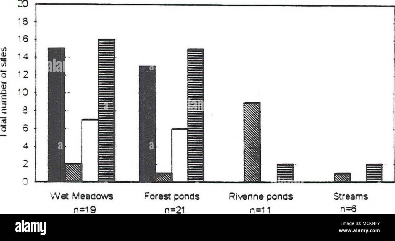 . â LS ^WT OPT 1SF Wet Meadows 0=19 Figure 36. All of the surveyed ponds and wetlands were broken up into three categories depending on the habitat characteristics. Included are the streams surveyed. The bars represent the total number of sites a species was observed. All SF observations in streams were only non-breeding adults. LS = Long-toed Salamander TF = Tailed Frog WT = Western Toad PT = Pacific Treefrog SF = Spotted Frog - Stock Image