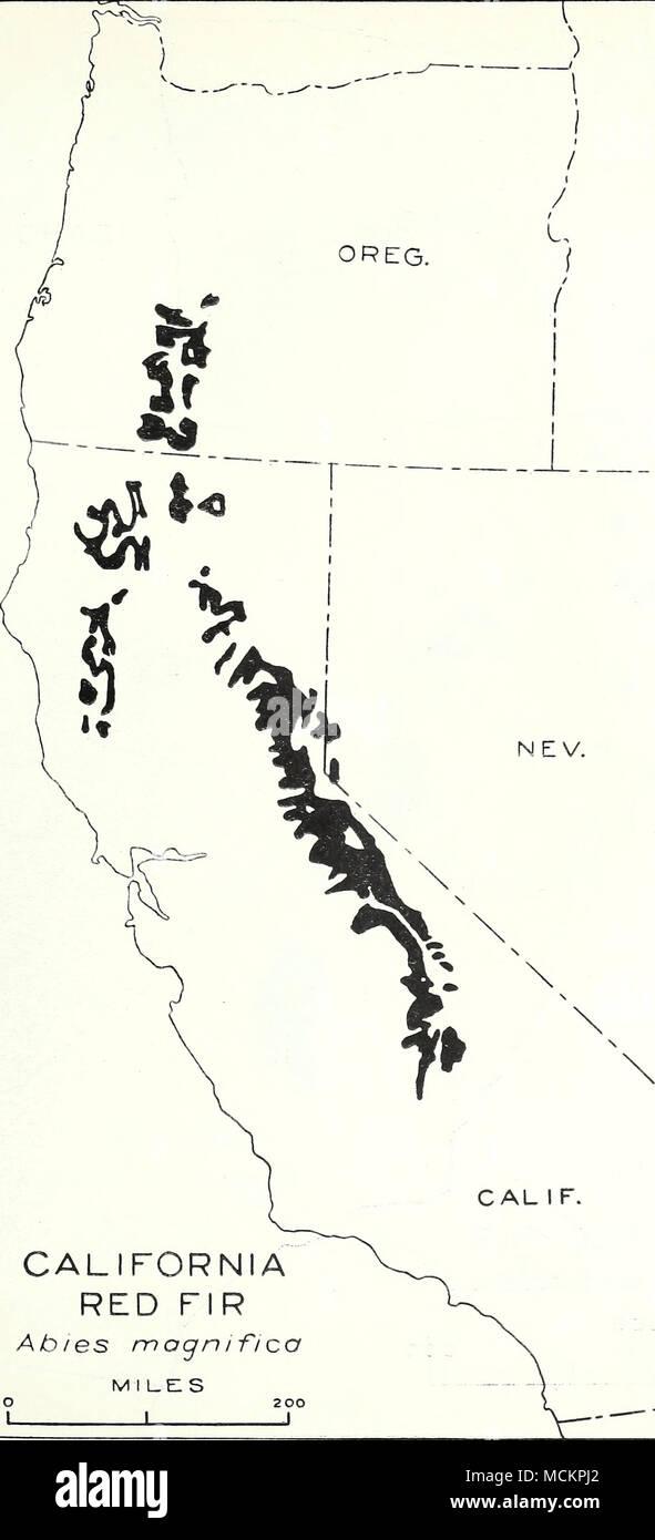 ". ""U ) / IDAHO CALIFORNIA RED FIR Ab/es mognifica m i l_e: s • 200 1 1 1 H N  N / I ""^ 1: ABIES MAGNIFICA A. MURRAY Map 47 CALIFORNIA RED FIR - Stock Image"