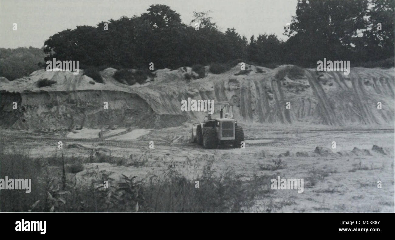 """. FuJLiRK 6. Sand mining initiated in 198.5 on a sand ridge in .Scott C.ountv. Illinois """"ii lI,h^â right of and in Iront ol the end loader. Illinois chorus frogs (PsemUurLs streckeri dlimiiiiM] win site in the springs of 1984 and 1985. Photograph taken on 30 August 1985 by Kevin J. Tarrant. il  I  - on ihr slope to the ('.ml I .iIIiiil; .iil .ii ciil to this Stock Photo"""