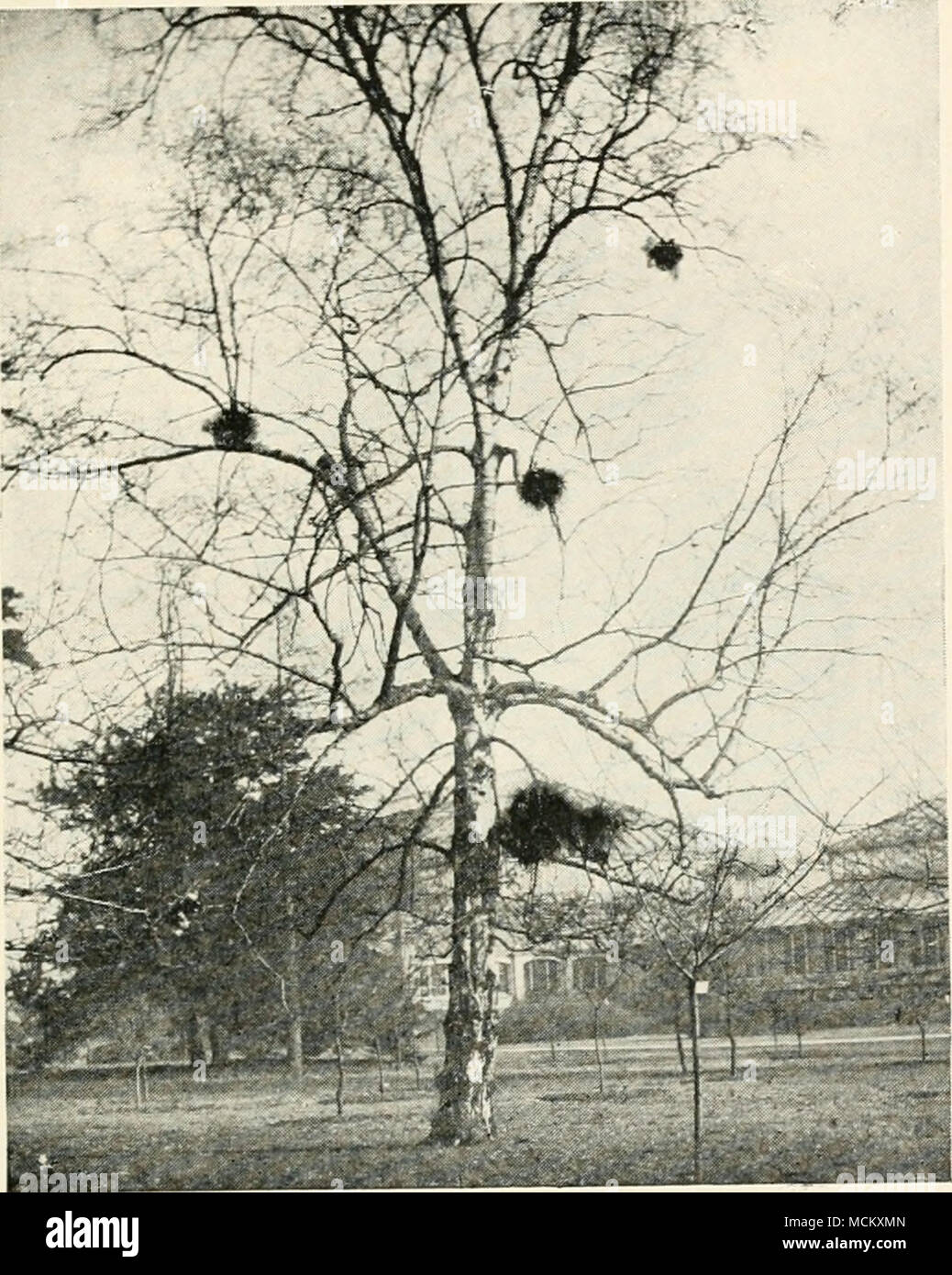 Birch Tree MO Middle Eastern Single Women