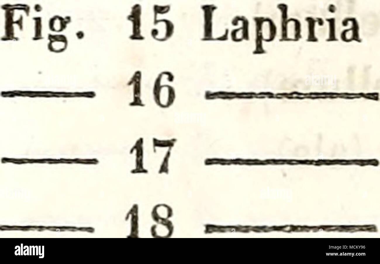 8fbb367ae ( 350 ) Venuzuelensis (ala). rufifemorata (ala). prÅpotens ( .