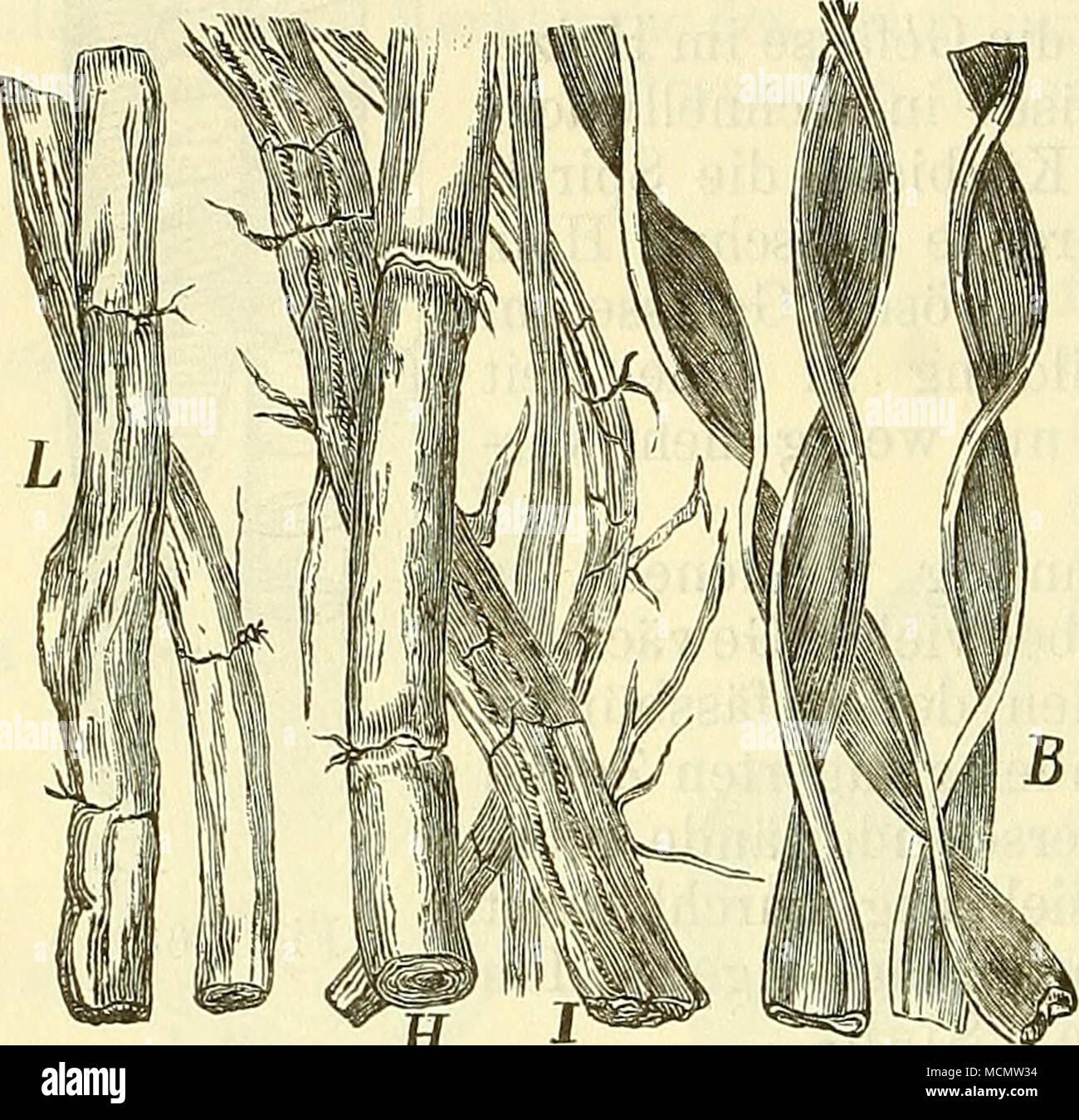 Gemütlich Gewebe Definition Anatomie Bilder - Menschliche Anatomie ...