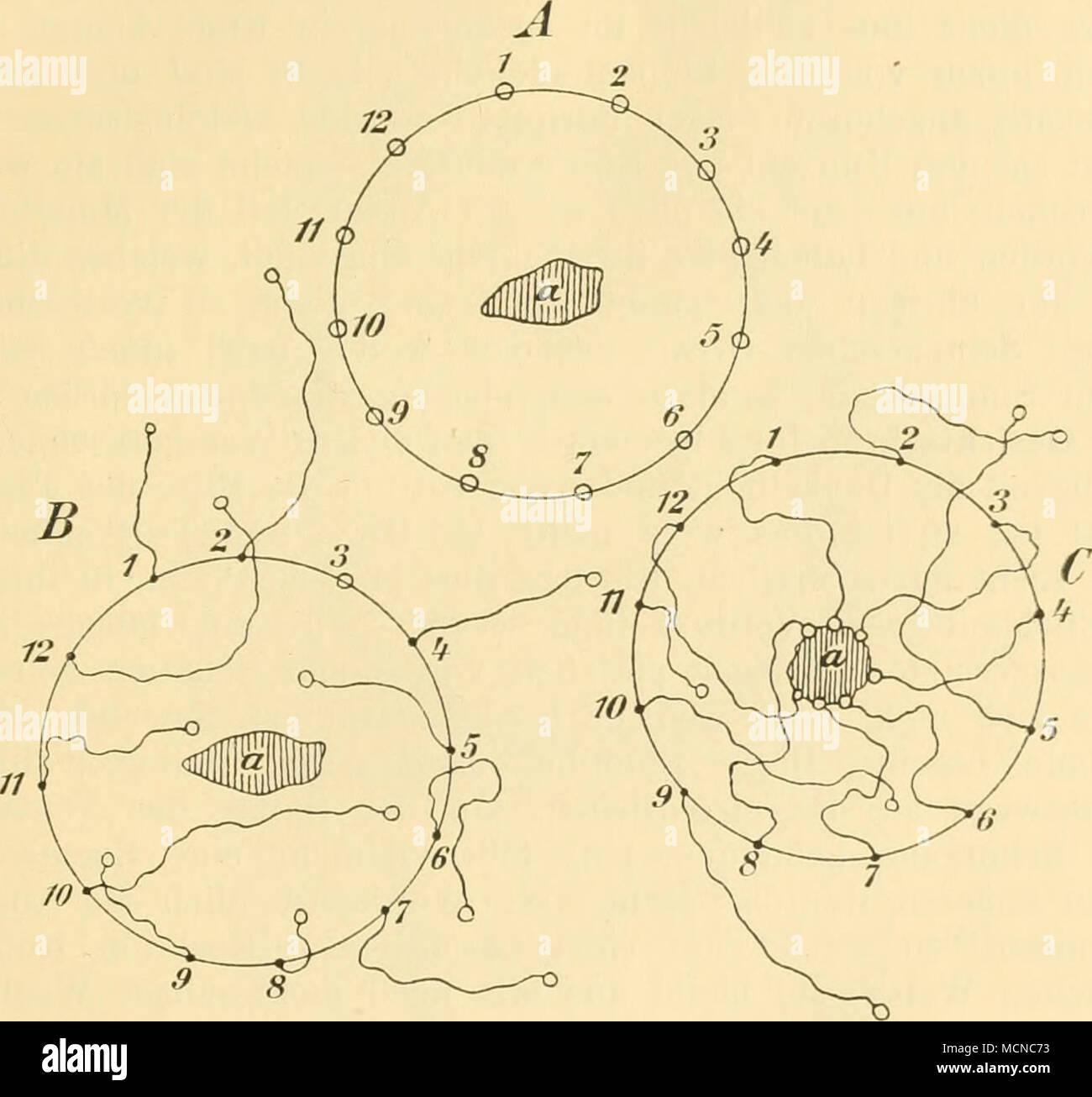 Fig. 22. Anordnung einiger Experimente zur Prüfung des Witterungs ...