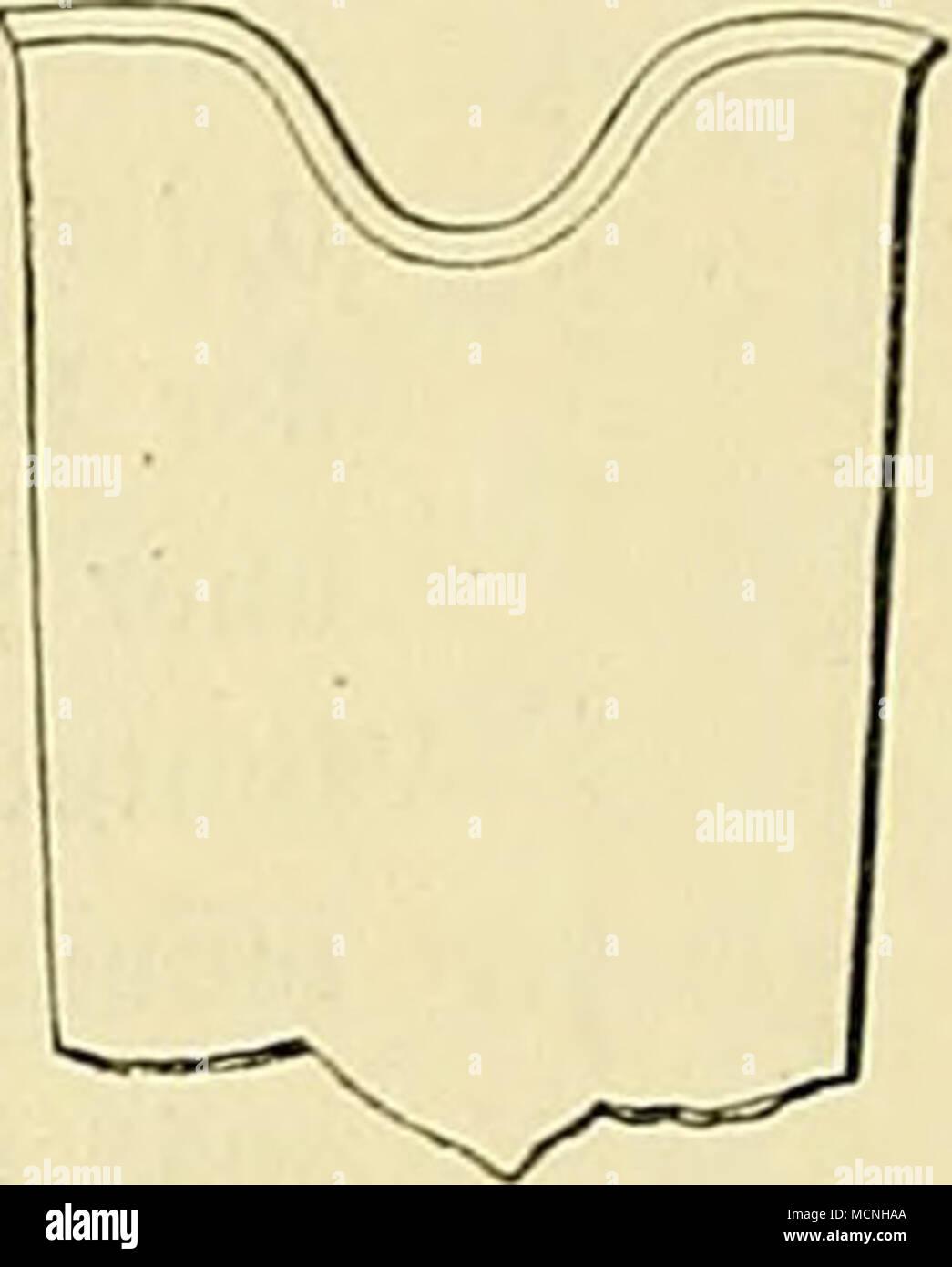 . M) Phraymoceras orthogaster Sandb. Taf. XIV. Fig. 4, 4a, 4b. Tubus purum elongulus, subfusiformis, regione ventrali fere recta, linea dorsuli sulis curva, dorso ipso transversim sutis evexa. Sectio transversalis brevi-ovula. Testa fere luevis, obsolelissime clathratu. Cellulae haud altae, singulae quueque quintum fere partem diametri dorsali-ventralis sepli efÃcientes. Cellula ultima satis magna, inÃato-conoidea, praecedens humillima. Sipho subcylindricus, radialo- lamellosus. Röhre nicht sonderlich lang-, spindelähnlich, in der Bauchgegend fast gerade; Rücken der Länge nach ziemlich gek - Stock Image