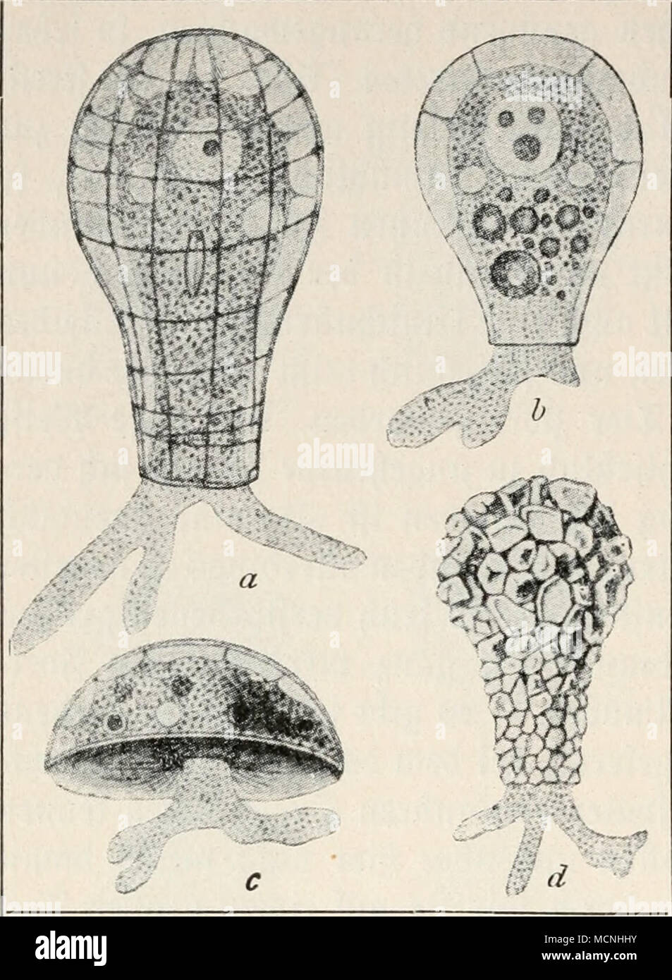 Beste Hai Muskelanatomie Bilder - Anatomie Ideen - finotti.info