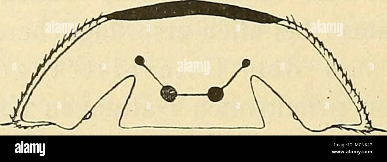 Ausgezeichnet Schematisches Diagramm Der ...
