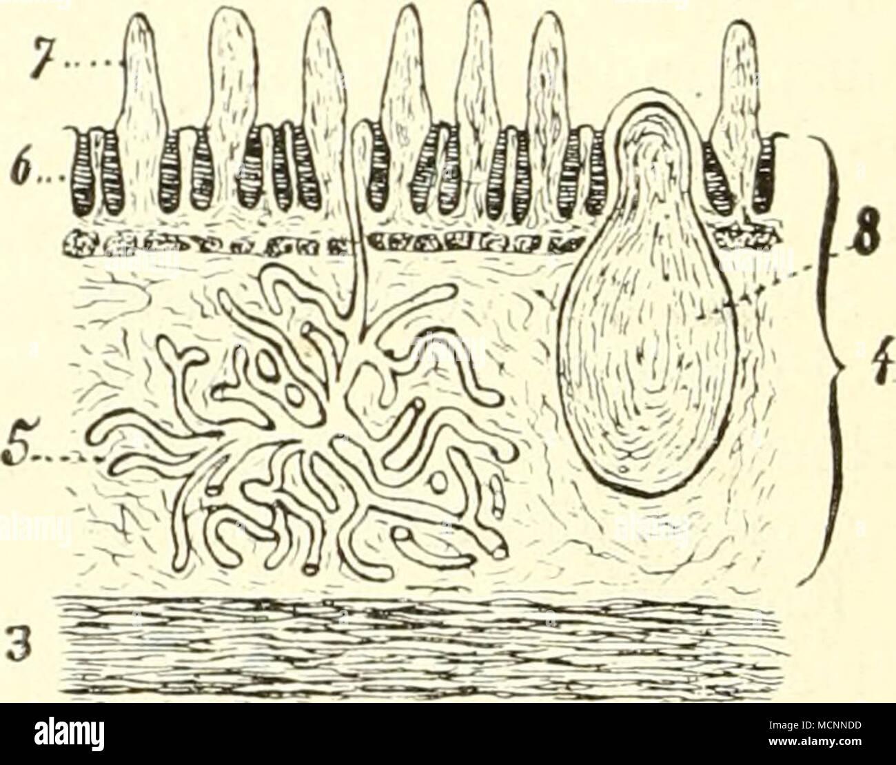 Großzügig Anatomie Der Pfortader Ideen - Menschliche Anatomie Bilder ...