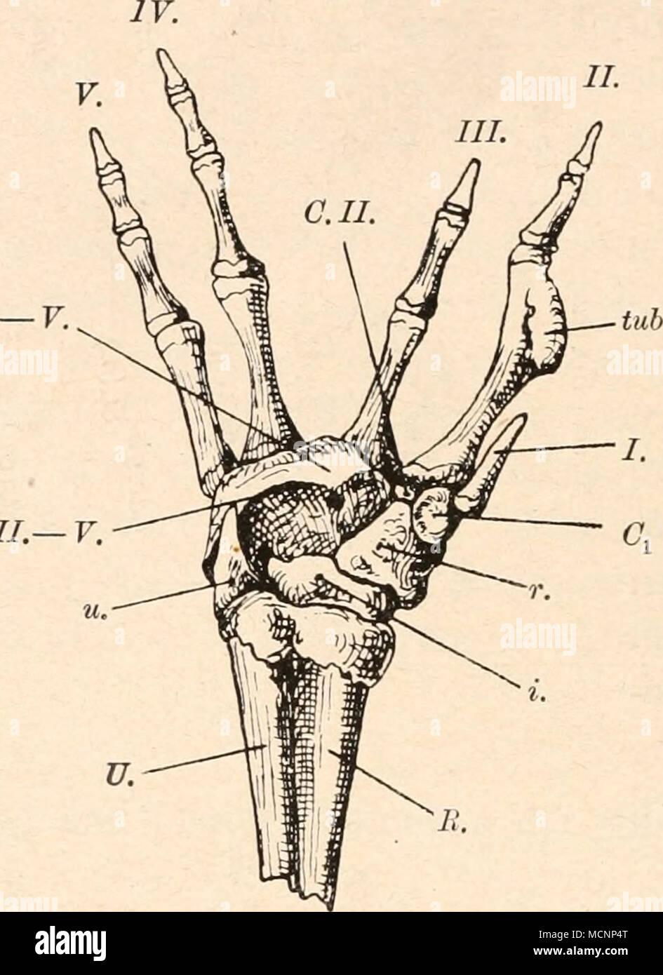 Großzügig Antworten Auf Anatomie Und Physiologie Färbung ...