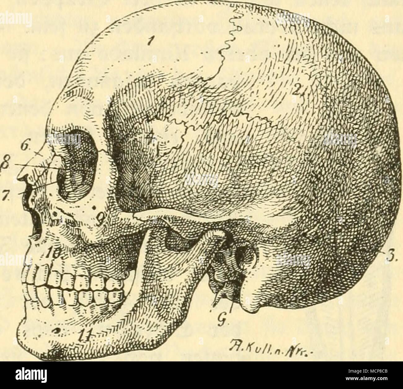 Berühmt Anatomie Und Physiologie Kapitel 7 Studienführer ...