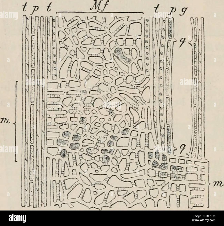 Atemberaubend Anatomie Des Holzes Bilder - Anatomie Ideen - finotti.info