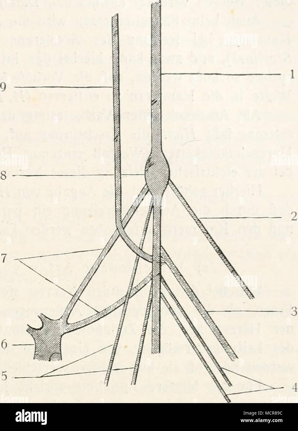 Gemütlich Ganglion Nerven Fotos - Menschliche Anatomie Bilder ...
