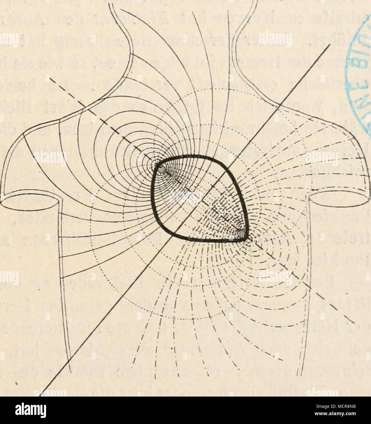 Fig. 227. Schema der durch die Aktionsströme des menschlichen ...