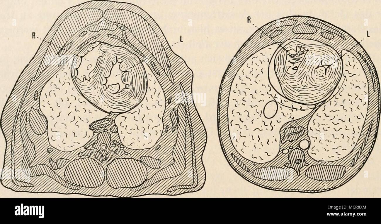 Fantastisch Beinsehne Anatomie Ideen - Anatomie Ideen - finotti.info