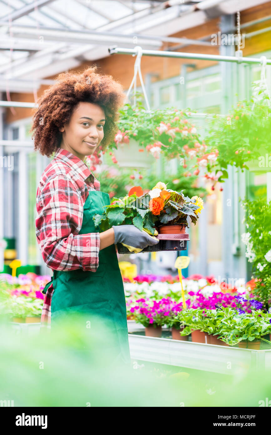 Side view of a dedicated florist holding a tray with decorative potted flowers - Stock Image