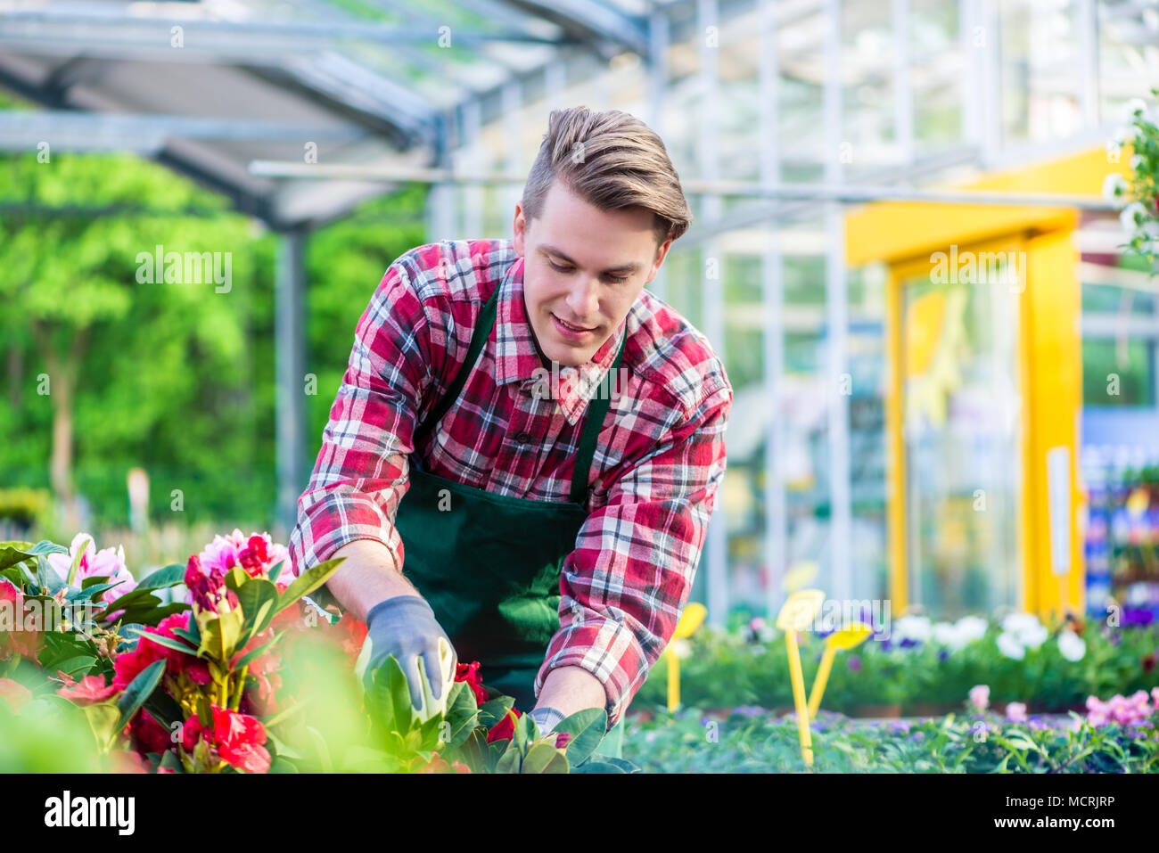 Dedicated florist during work in a modern flower shop - Stock Image