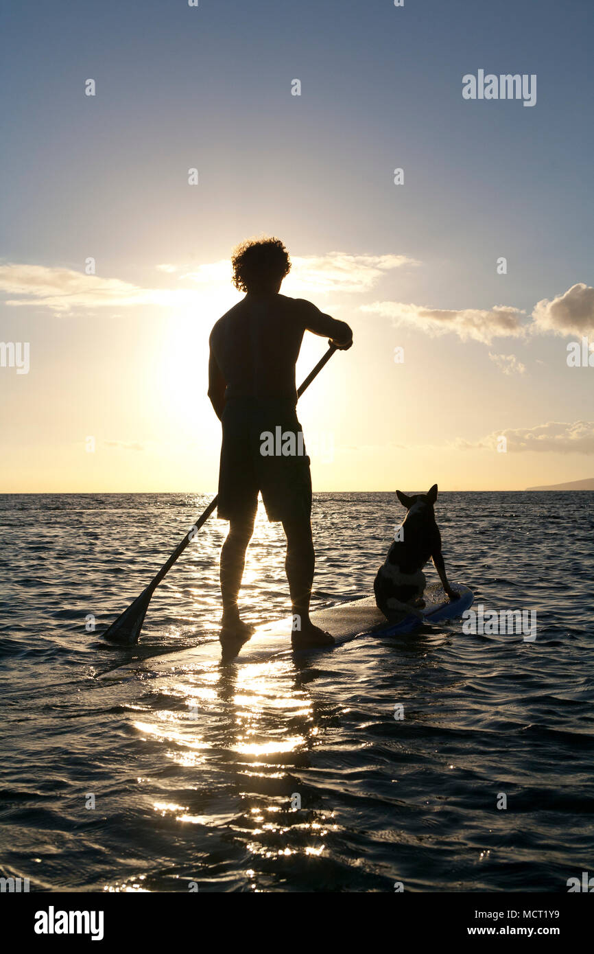 1db4d9f209fc83 Man and his dog stand up paddle at sunset at Olowalu