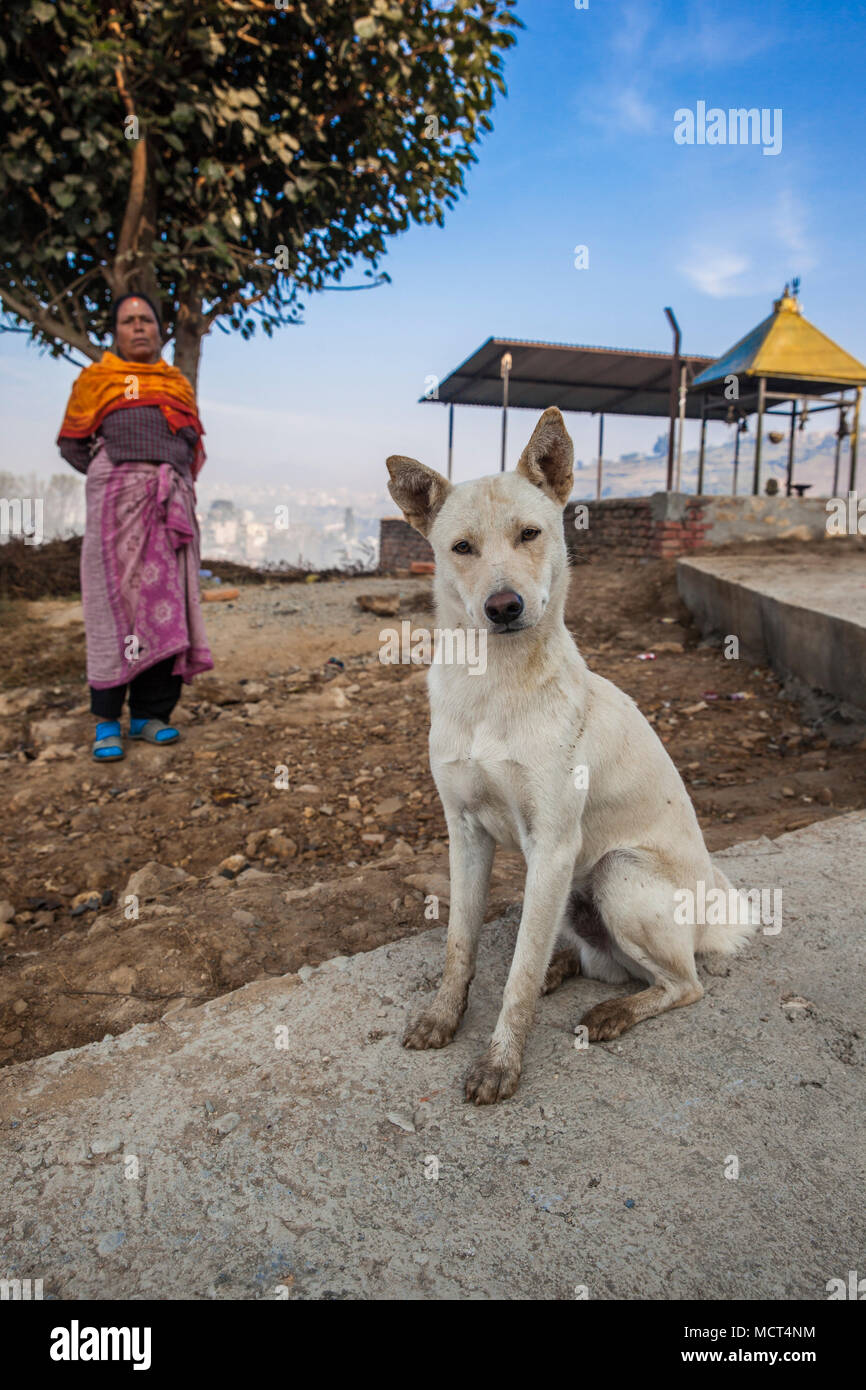 Portrait of watchdog sitting in front of female pujari priest and looking at camera, Patan, Bagmati, Nepal - Stock Image
