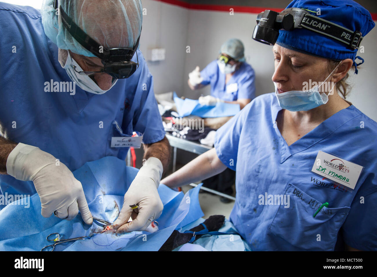 Male and female vet during dog neutering procedure, Patan, Bagmati, Nepal - Stock Image