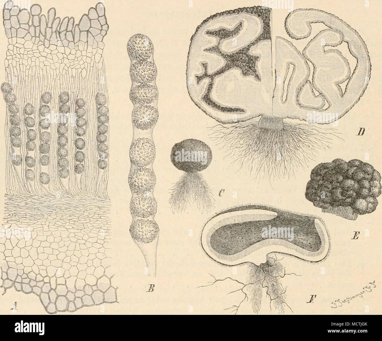 Gemütlich Curica Greys Anatomy Ideen - Anatomie Ideen - finotti.info