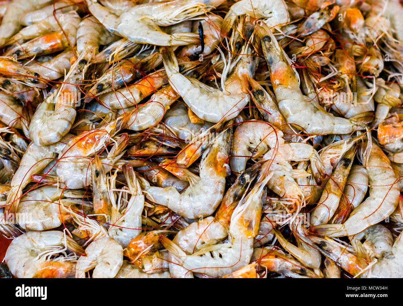 heap of golden white shrimps prawn lobster seafood for sale in fish market - Stock Image