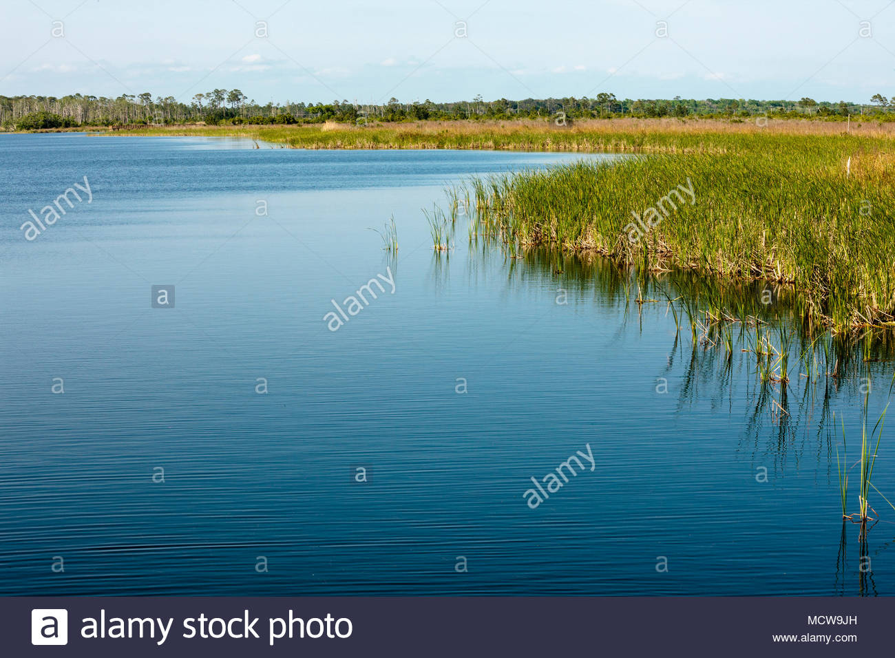 Overlooking the freshwater Lake Shelby in Gulf State Park, Gulf Shores, Alabama in early April Stock Photo