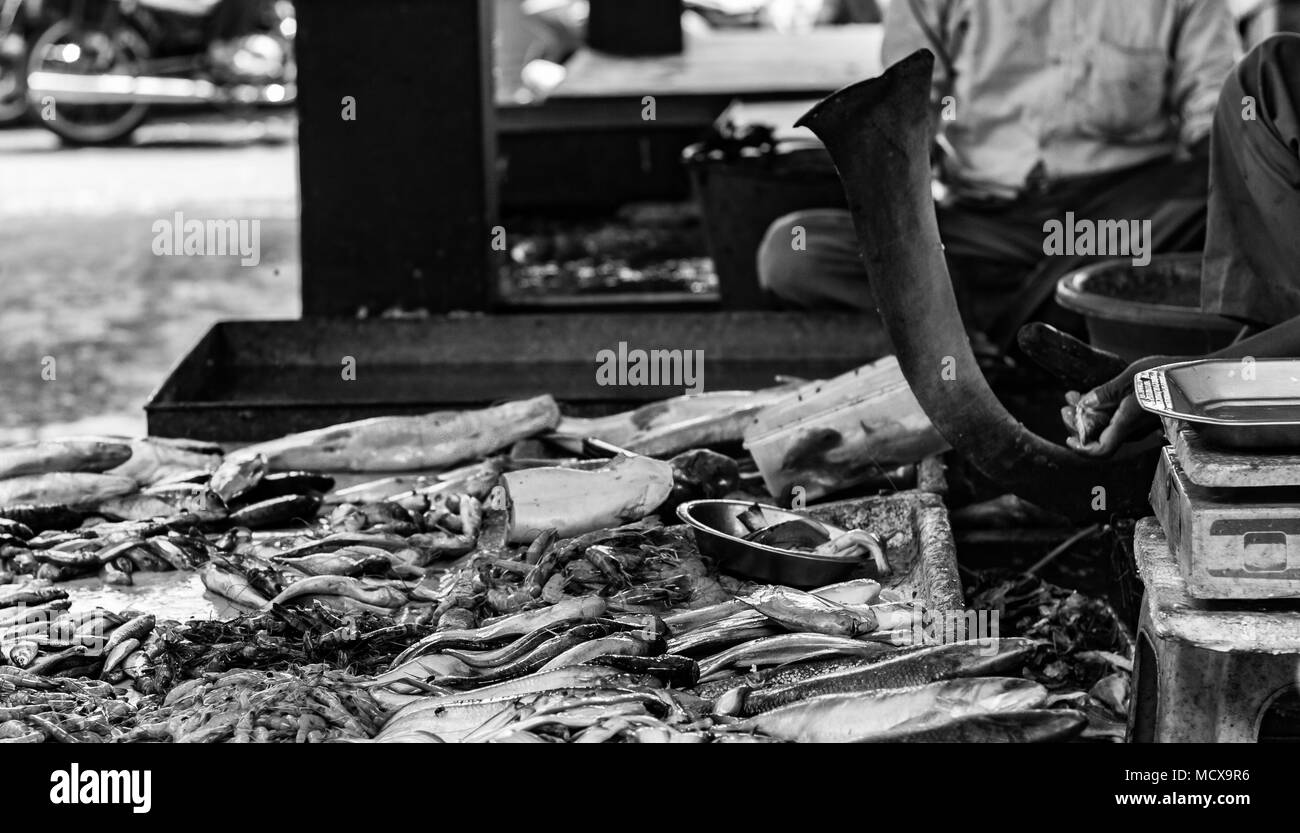 Hilsa rohu katla lobster prawn and various types of fishes displayed in indian fish market at kolkata in black and white