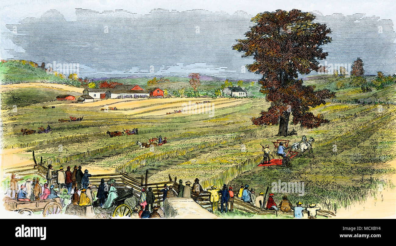 Reaping wheat by machine in the 1850s near Syracuse NY. Hand-colored woodcut - Stock Image