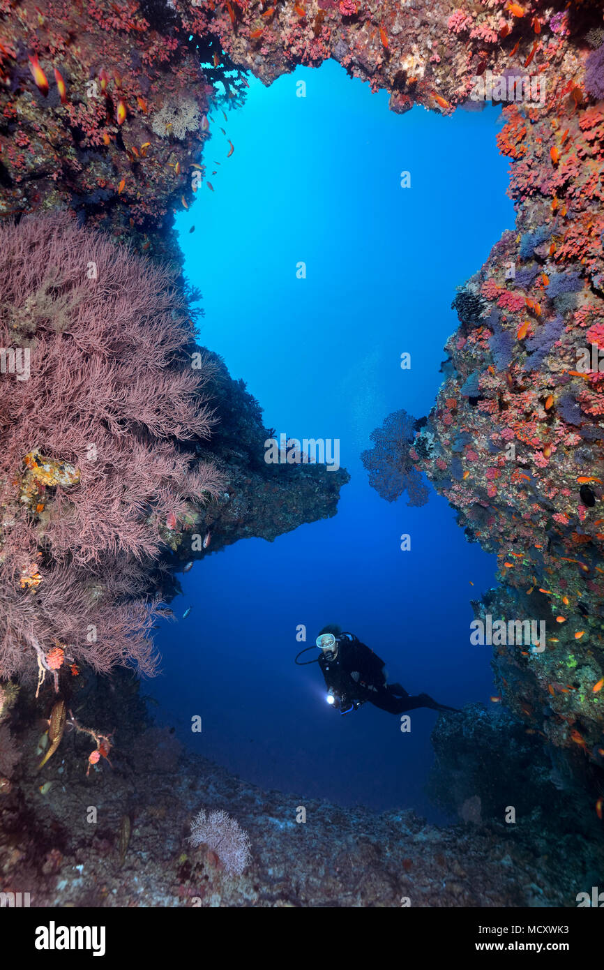 Diver looks at great reef breakthrough, Indian Ocean, Maldives - Stock Image
