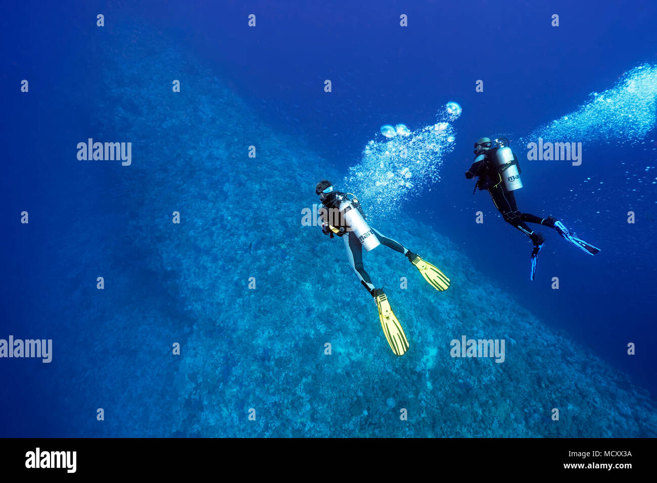 Two divers diving over coral reef, deep diving, Elphinstone Reef, North Plateau, Red Sea, Egypt - Stock Image