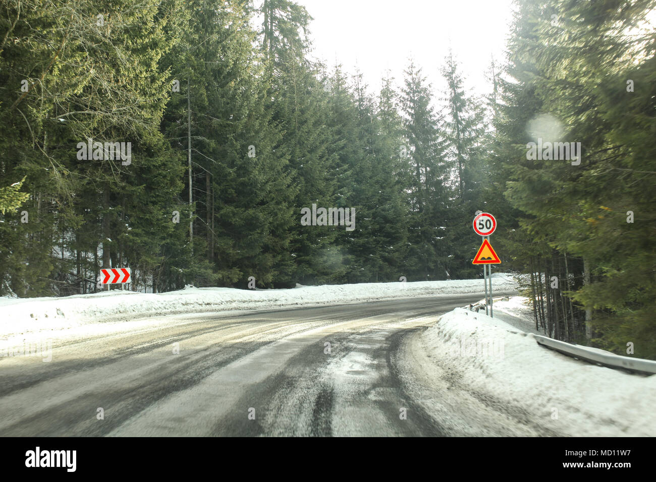 Driver view on sharp road curve, partially covered with snow in coniferous forest, with strong blinding sun light. Speed limit 50 and bumps sign to il - Stock Image