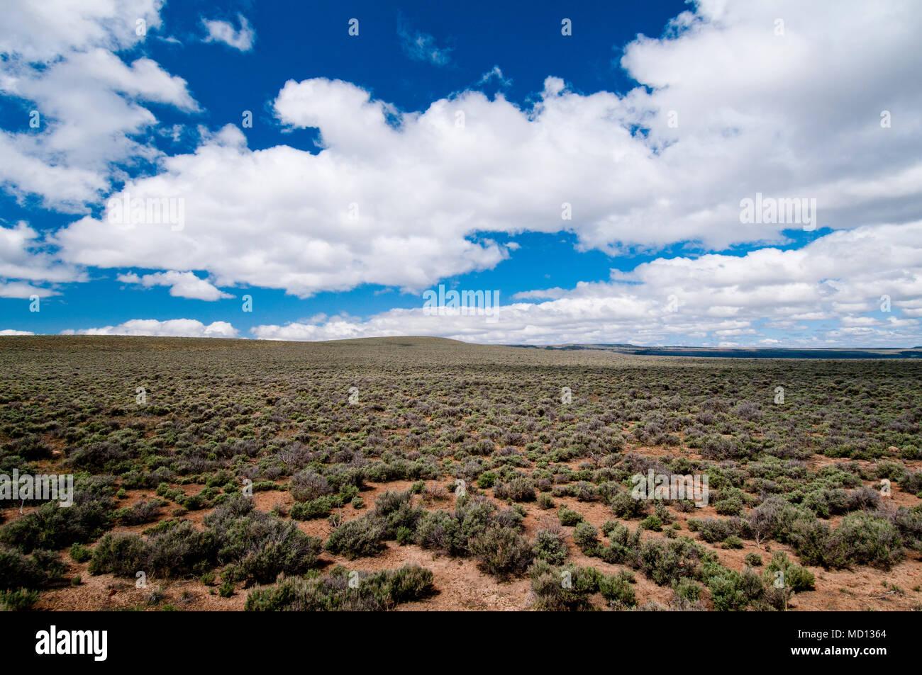 'Sagebrush sea' in the high desert of SE Oregon - Stock Image