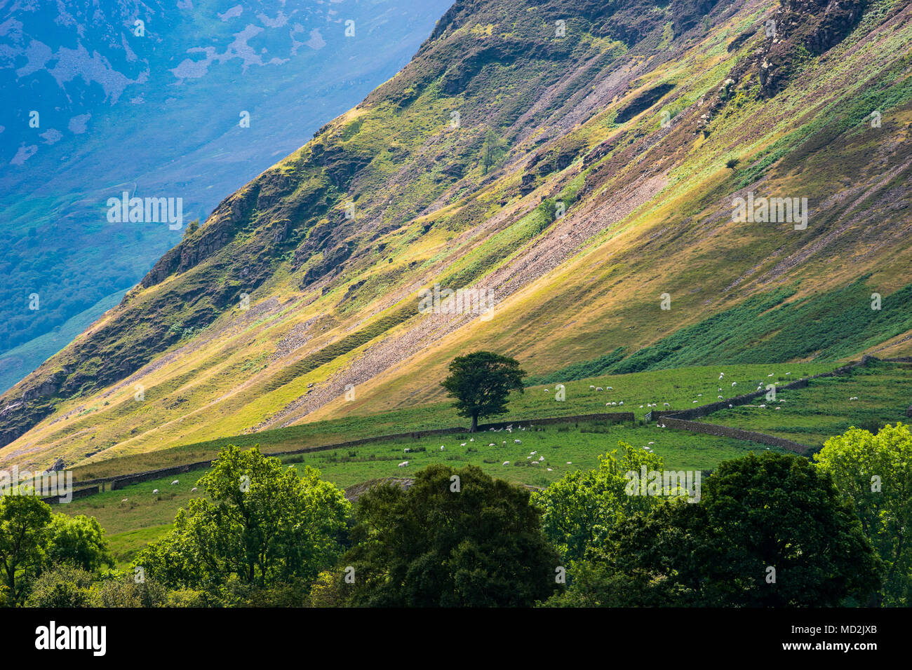 Lone Tree and Loweswater Fell, The Lake District, UK - Stock Image