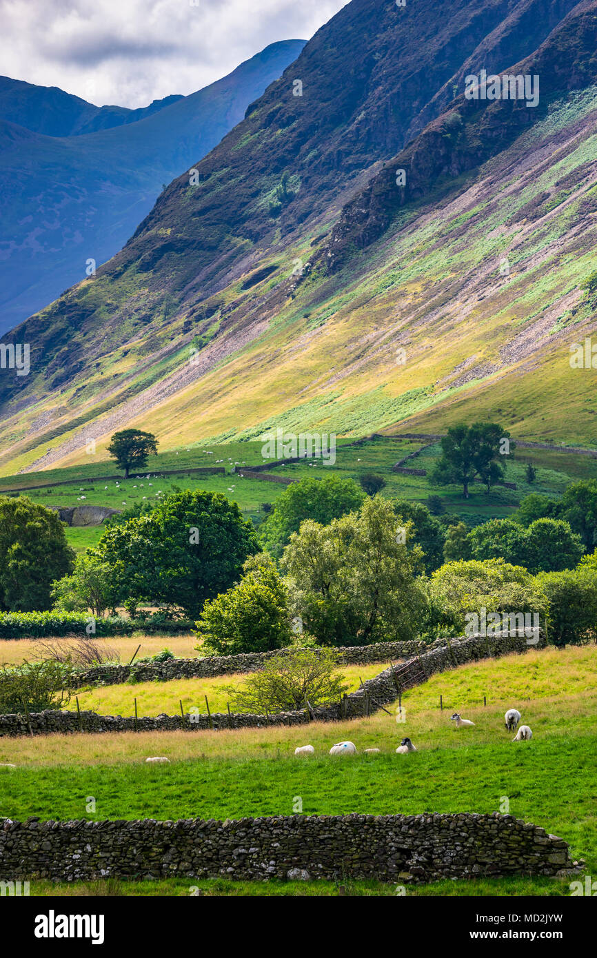 Sheep and Loweswater Fell, the Lake District, UK. - Stock Image